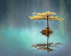 Your session. Tree in pond